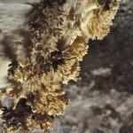 carlsbad_caverns3