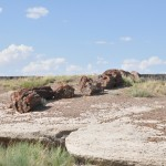 petrified_forest1